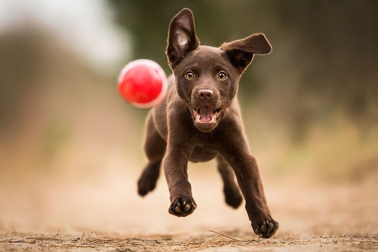 Hundefotografie: Tipps & Tricks – #dogsphotography Hundefotografie: Tipps & Tric…