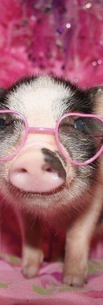 piggy:) <3 https://www.pinterest.com/keymail22