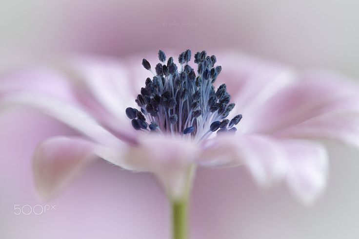 In my heart ... by Silvia Spedicato on 500px