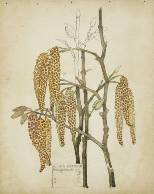 Charles Rennie Mackintosh, Alder Catkins,  1914