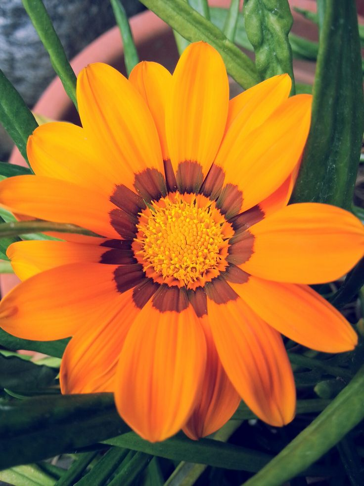 Flower. Flower power. Flower porn. Orange. Fiore. La magia dei fiori. Arancio.  Photo by me, AngelaRizzo.