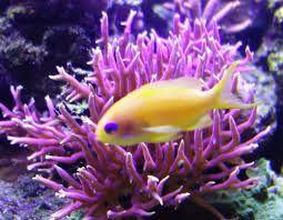 la bellezza della barriera corallina con pesci tropicali