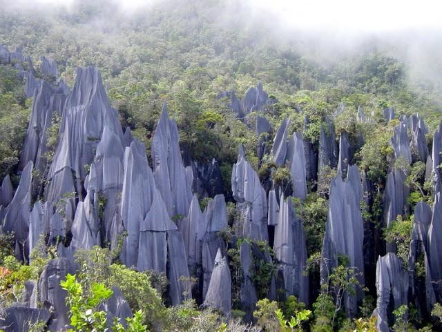 Pinnacles Gunung Mulu National Park, Sarawak, Malasia
