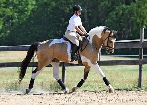 This horse has the exact colors I want a horse to have when I get one..omg