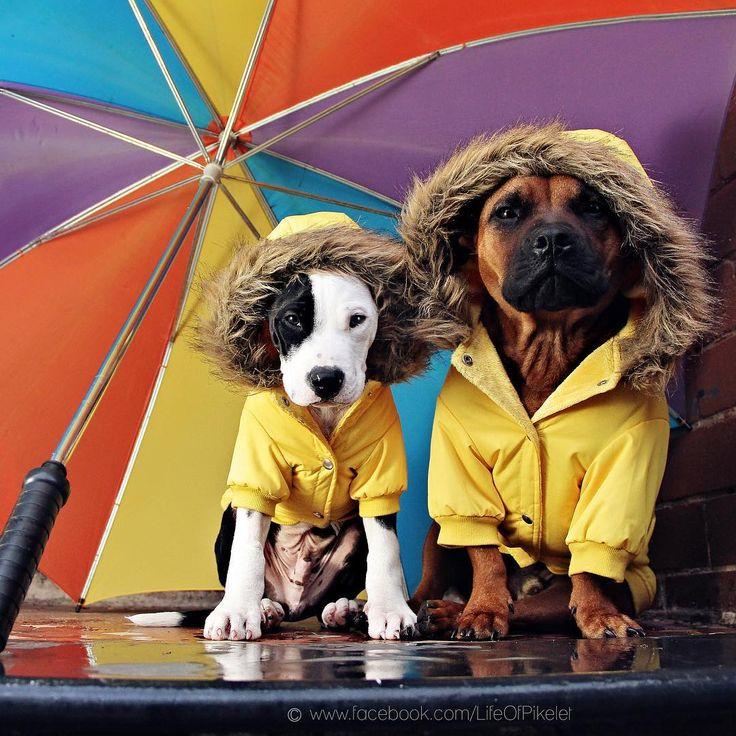 #sydneydogs #rescuedogsofinstagram