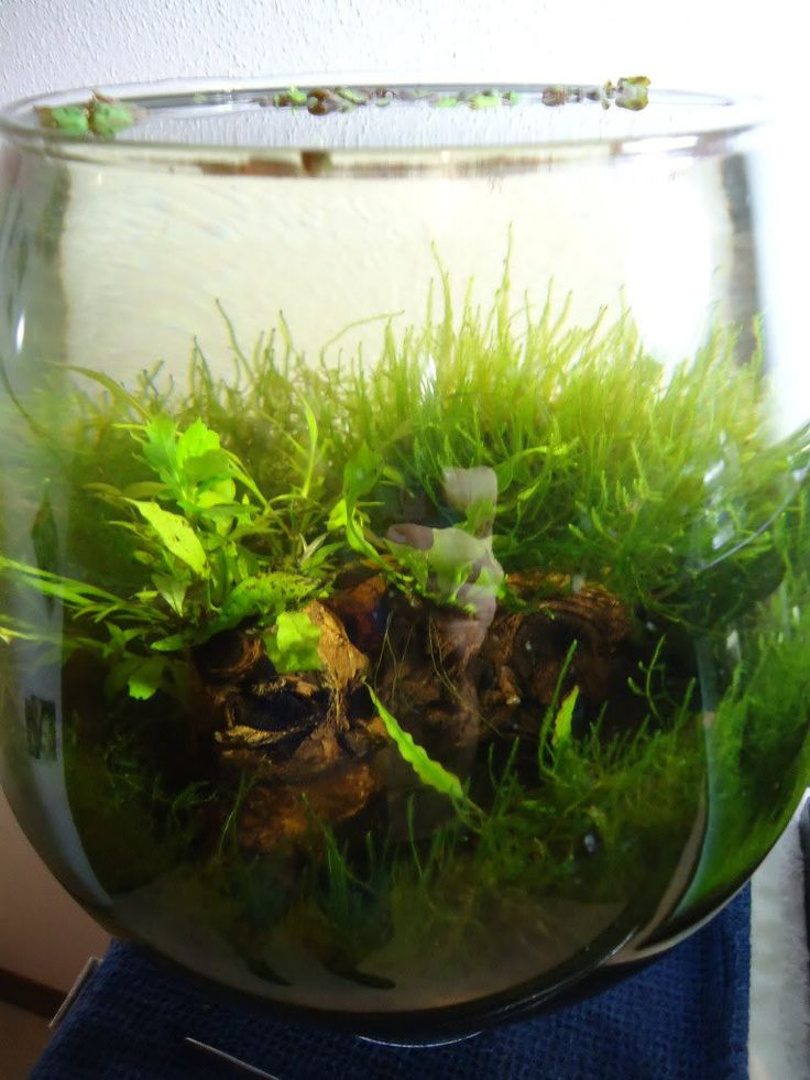 Betta bowl google search aquascaping pinterest betta for Betta fish tanks petco