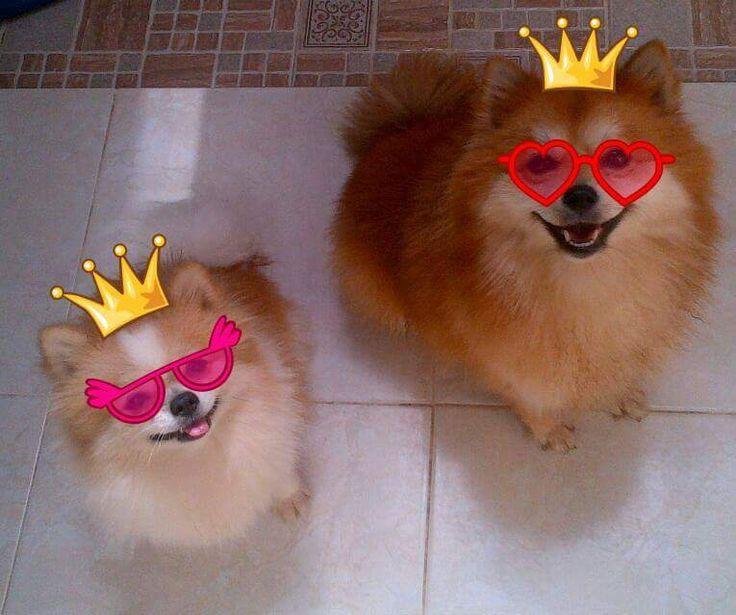 Ciri-ciri Anjing Bahagia ~ Tips Info Cara