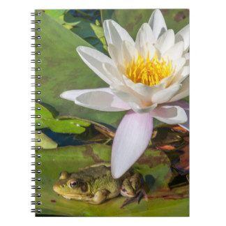 Carnet Une grenouille sous une fleur de nénuphar