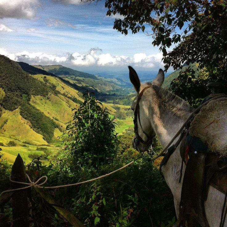 El eje cafetero de Colombia