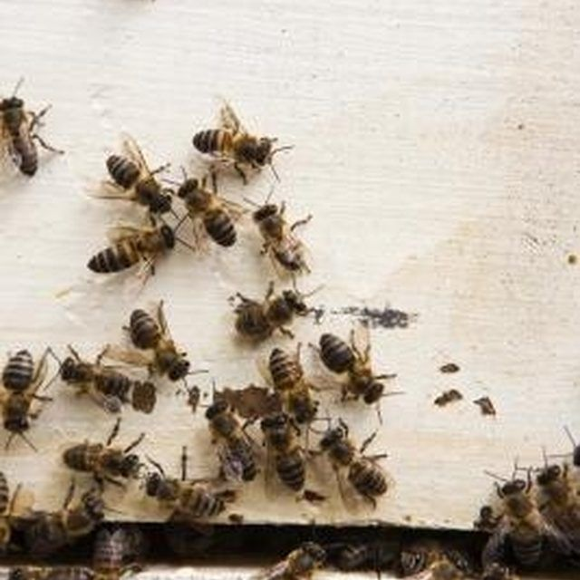 Try one of several home remedies to repell or kill bees.