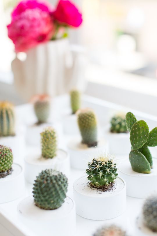 Mini cactus pots as party favors!