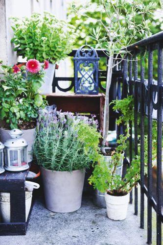 Les balconnières pour fleurir le balcon http://www.m-habitat.fr/terrasse/balcons/les-balconnieres-2829_A #fleur