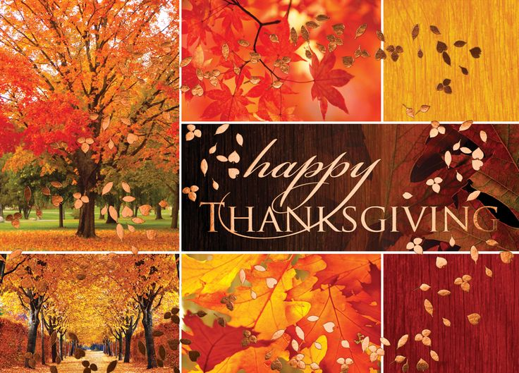 The 13 best thanksgiving cards images on pinterest holiday cards fall foliage collage thanksgiving card advanced printing graphic solutions m4hsunfo