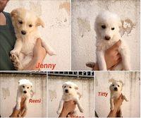 Ohana Dog_Blog: Cuccioli piccola taglia in Adozione a Bari