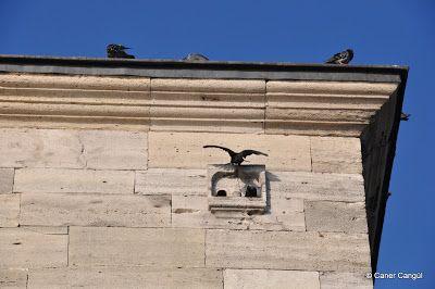 Emimönü Yeni Camii Üstündeki Kuş Evi