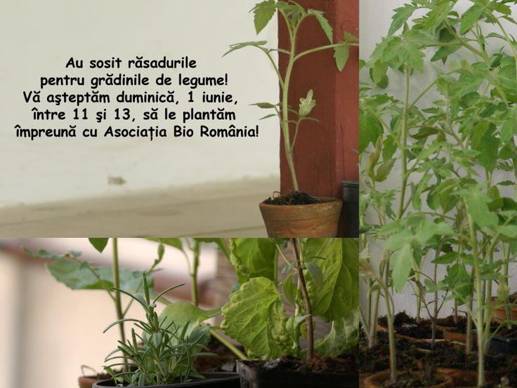 De 1 iunie plantam gradini de legume!