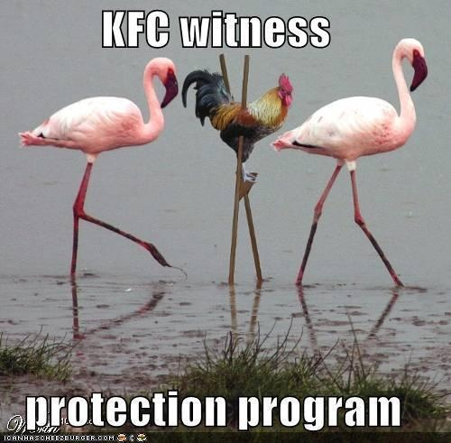 So absurd! Yet so funny!: Kfc Witness, Protection Program, Witness Protection, Funny Pictures, Funny Stuff, Humor, Flamingos, Funny Animal, Funnystuff