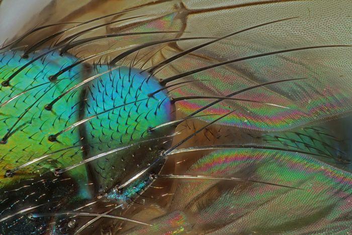 10 primeros lugares y 12 menciones honoríficas del concurso de fotografía microscópica Olympus BioScapes | Pijamasurf
