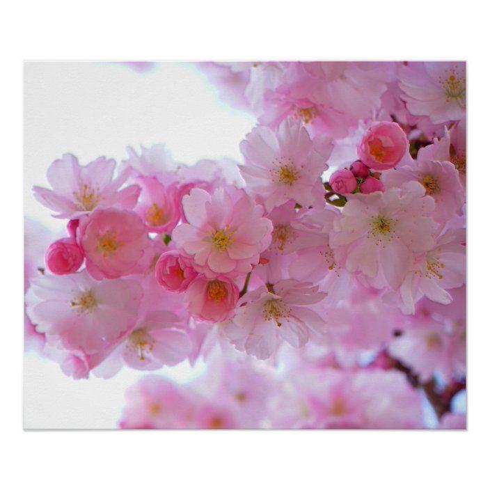 Japanese Cherry Tree Flower Poster Zazzle Com Japanese Cherry Tree Japanese Cherry Japanese Cherry Blossom