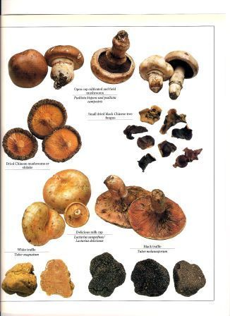 A wet late summer makes for good wild mushroom hunting. Here is a handy guide to which wild varieties are edible.