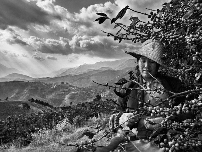 Em nova exposição, Sebastião Salgado mostra plantações de café | O Beijo