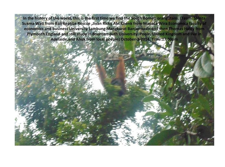 #ClippedOnIssuu from Take picture a second time orangutan south kalimantan by shinta sukmawati
