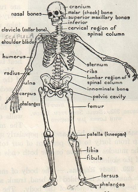 94 best clinical medical assistant salary images on pinterest the anatomy of a skeleton fandeluxe Gallery