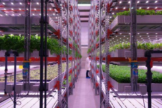 IBM Cloud selecionada por startup inovadora na área da agricultura sustentável indoor