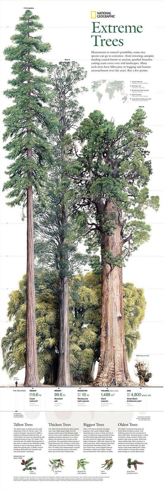 NG extreme trees