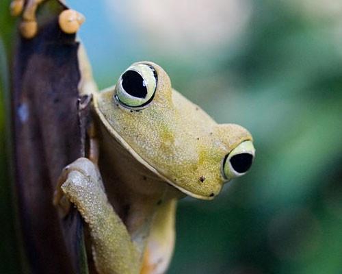 Cute: Froggy So,  Tree-Frog, Animal Kingdom, Capture Life, Macros Photography, Clayton Animal, Règne Animal, Natural Animal, Make Me Smile
