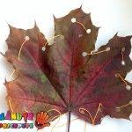 Coasem frunze