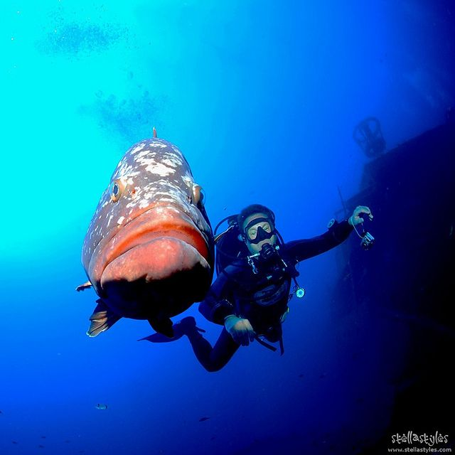 Cheek to cheek - close encounters with a grouper :) / Madeirense Wreck, Porto Santo, Portugal