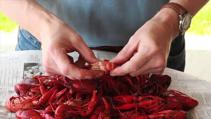 Crawfish are a Cajun delicacy, but getting into their shells is a skill. Not knowing how to peel a crawfish shouldn't prevent you from enjoying mudbugs. It's easy; watch and learn. Now that you are a crawfish-peeling expert, head over to www.cajungrocer.com for the lowest priced crawfish, live or boiled, and all the seasoning and equipment you need for a successful Louisiana crawfish boil.