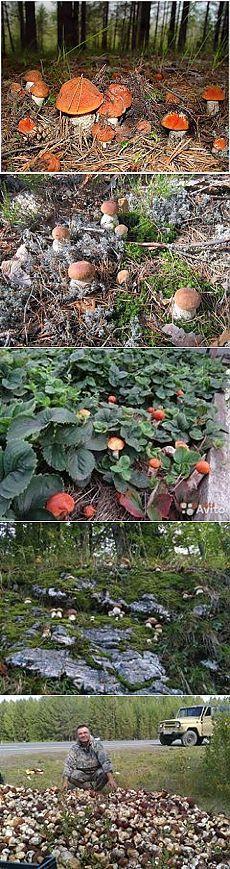 Как посеять грибы.