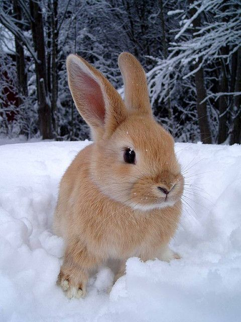 bunny in snow by Madeleine on Flickr
