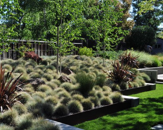 by Huettl Landscape Architecture | Phormium 'Dark Delight' (Red New Zealand Flax) Festuca glauca 'Elijah Blue' (Elijah Blue Fescue)