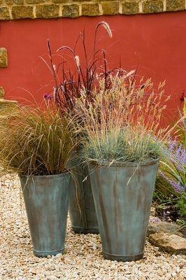 242 best ornamental grasses images on pinterest for Tall grasses for pots