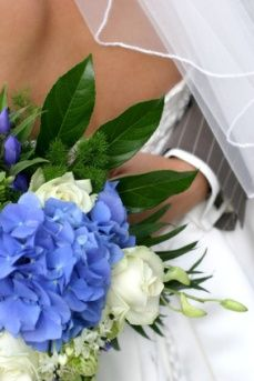 hydrangea wedding bouquets--love that electric blue and green--think blue morpho butterfly!