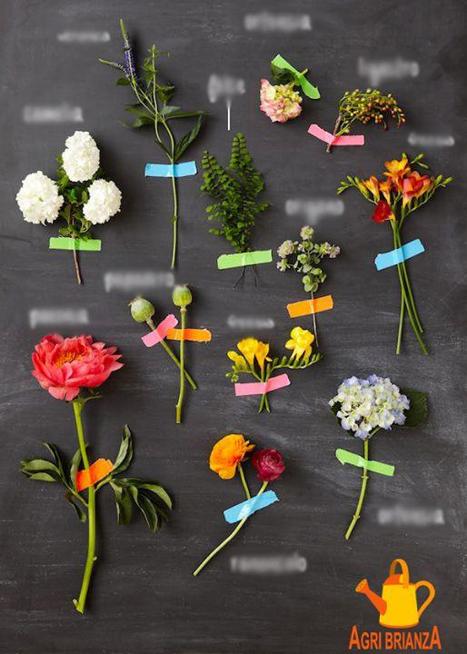 [FIORI|GIOCO] Credi di essere un esperto di fiori? Prova a indovinare il nome di almeno 5 di queste 12 tipologie - (aiutino: 4 hanno lo stesso nome...)  #garden #giardinaggio #potatura #verde #piante #gardening #orto #agricolo #piante #fiori #giardino #rasaerba #prato #agribrianza