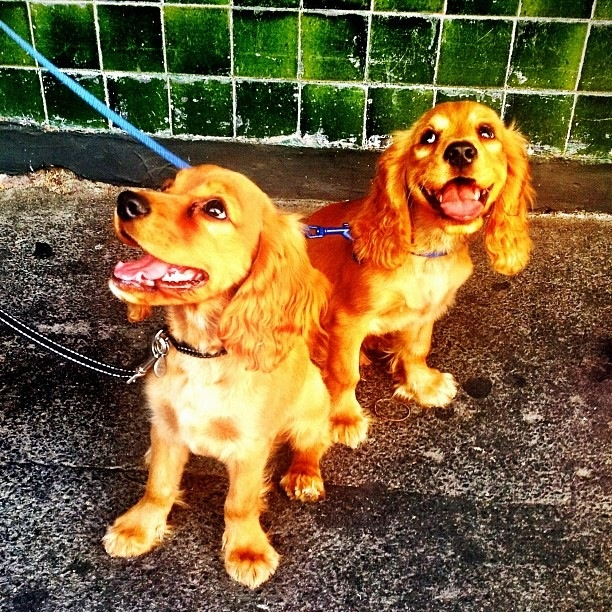 Meet 4 month old Rasta and Suki. The sweetest brothers in all of Melbourne.