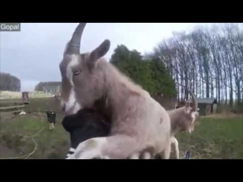 Excited Animals Loving their Peoples! So Cute : cute