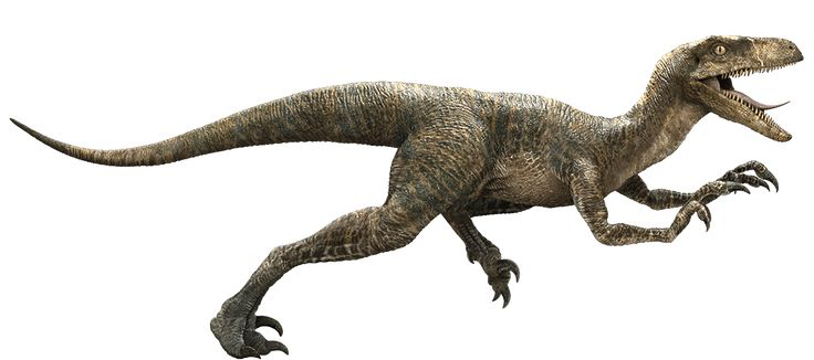 Il temibile, rapido e feroce velociraptor