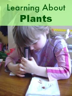 Learning to Identify Plants by Families. An article by ...