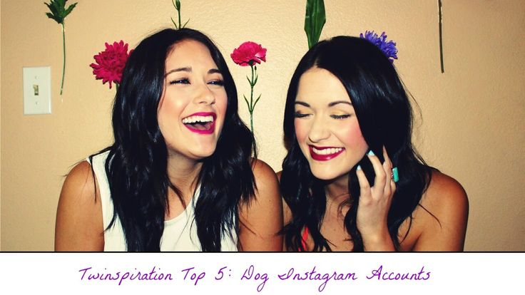 Twinspiration Top 5: Dog Instagram Accounts