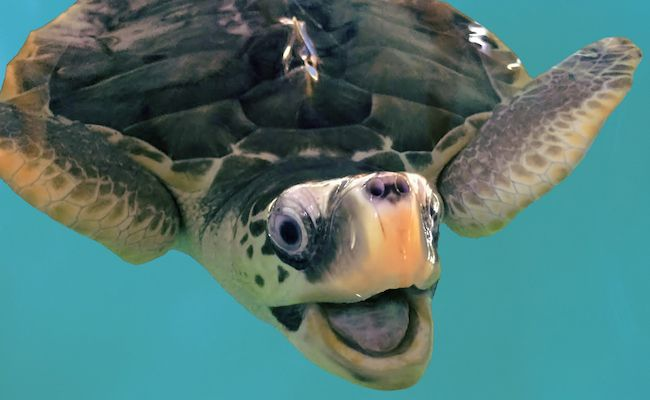 9 Surprising Facts About Sea Turtles