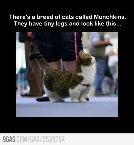 ahahhaha oh my gosh!