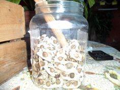 Toma semilla de moringa para evitar caída del cabello