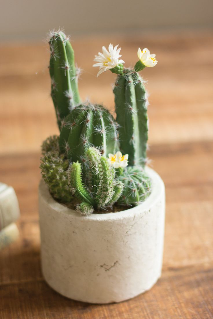 Artificial Cactus Garden With Round Paper Pot by Kalalou is widely used for the indoor or outdoor decoration, as this product enhance the beauty of the place. The looks of this product is highly elega