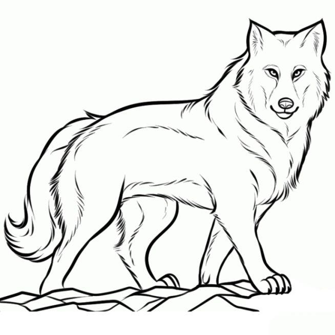 Wolf Ausmalbilder Ausmalbilder Resep Kuini