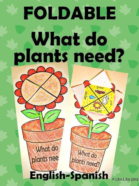 Plant foldable 1.50